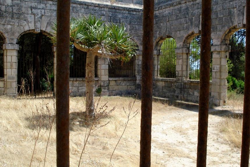 NUEVA PERSPECTIVA DEL EJEMPLAR UBICADO EN EL CENTRO DE DISTRIBUCIÓN DE ENFERMOS